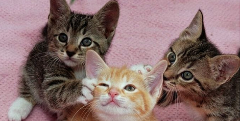 love triangle cats cover pic